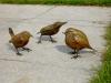 Petits oiseaux de jardin