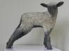 L'agneau 02