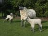 Moutonne et agneaux